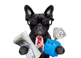 dog money and piggy bank
